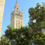 The Giralda Tower from amongst the orange trees of the Cathedral courtyard