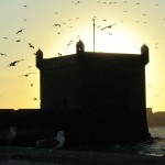 Essaouira port at sunset