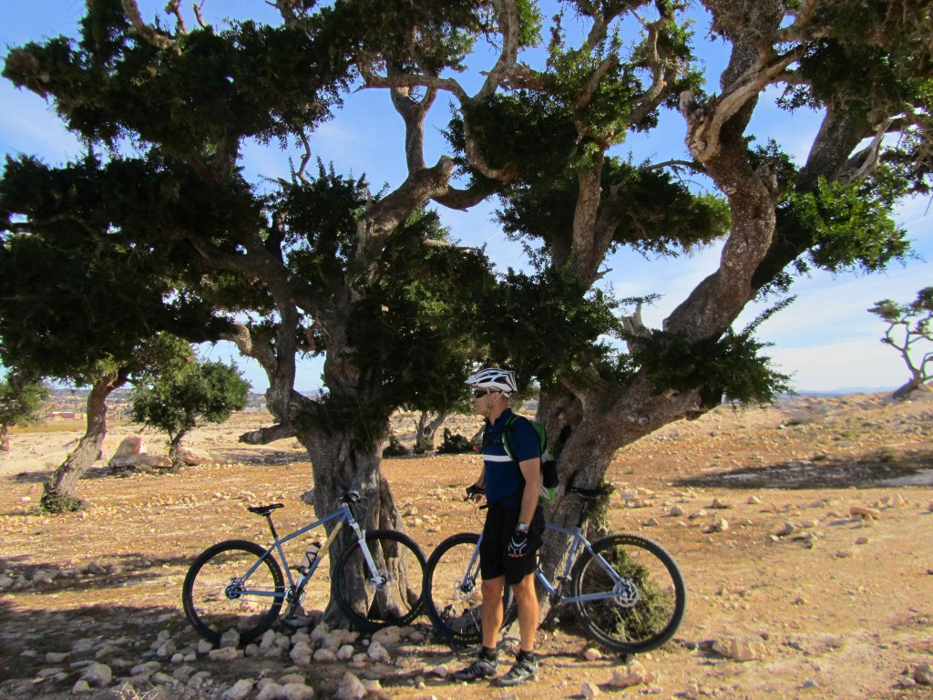 Cycling through the Argan groves, outside Imsouane