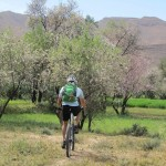 Riding through the cherry orchards in the fertile river valley, Taliouine