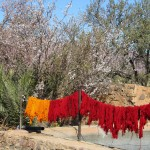 Bright colours of wool drying outside a small family house on the road to Agdz