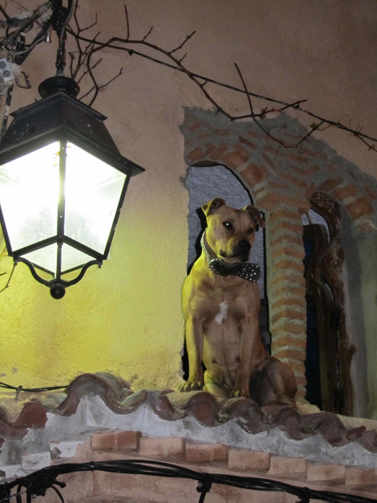 The coolest dog in Chefchaouen