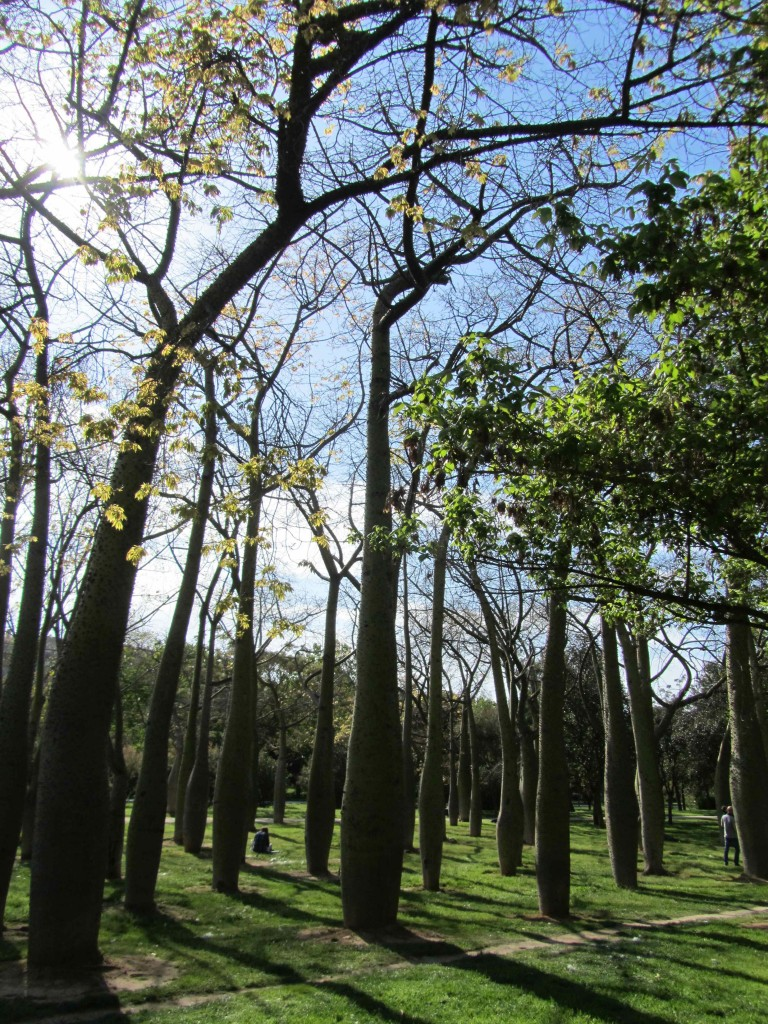 Bulbous trees in one section of the 9km long Jardin del Turia green belt, Valencia
