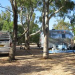 Camping under the bluegums, Alvor campsite