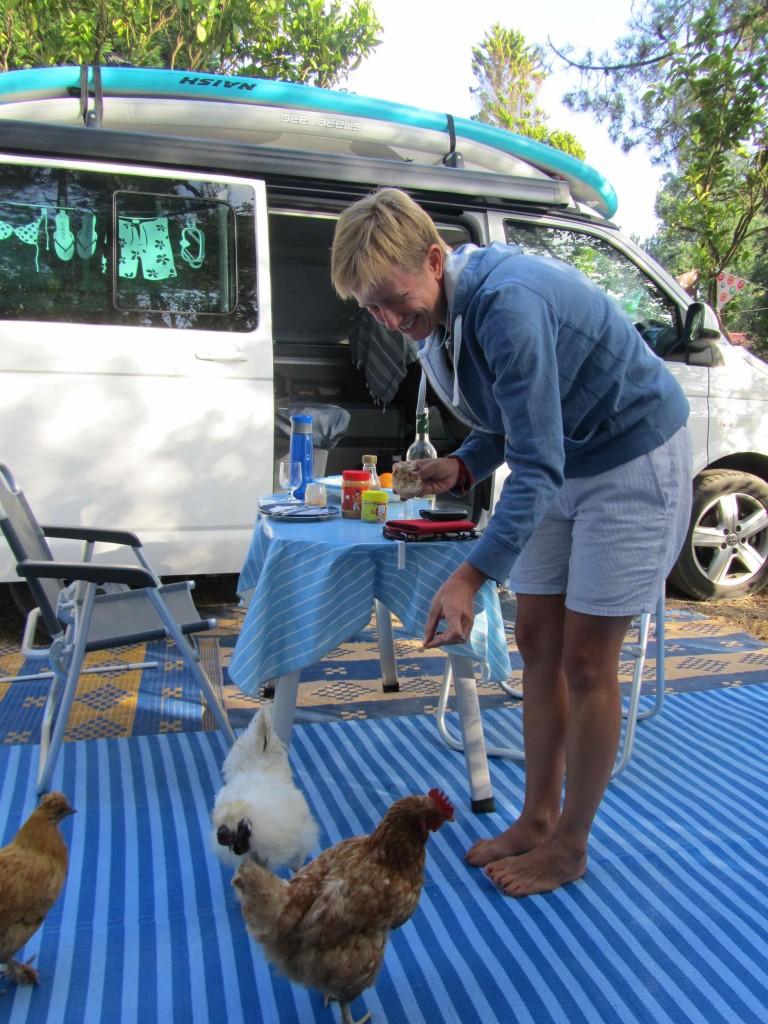 Feeding the chickens in camp, O Tamanco