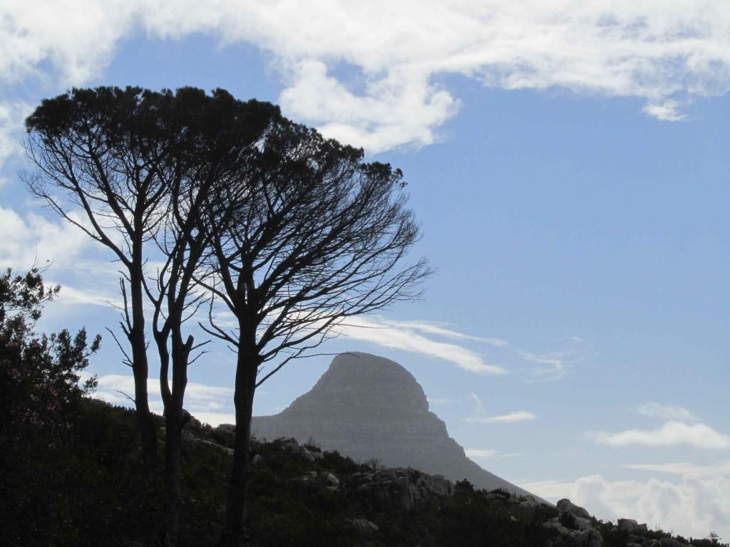Lion's Head view, Cape Town